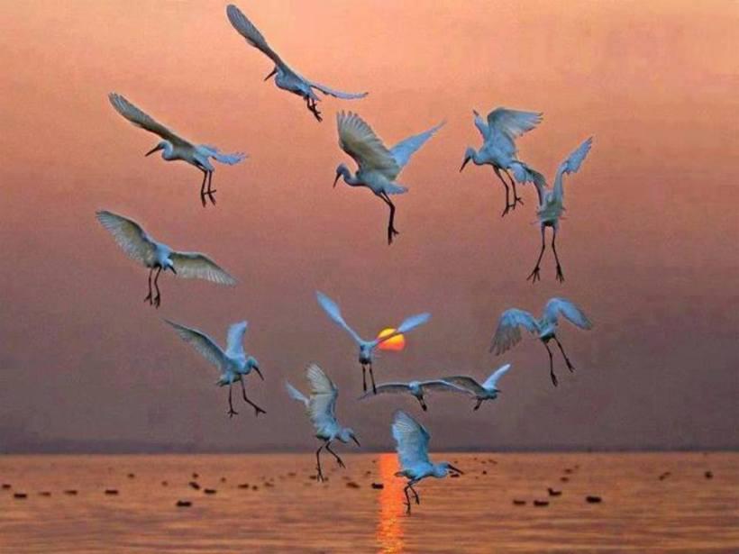 coeur oiseau mer
