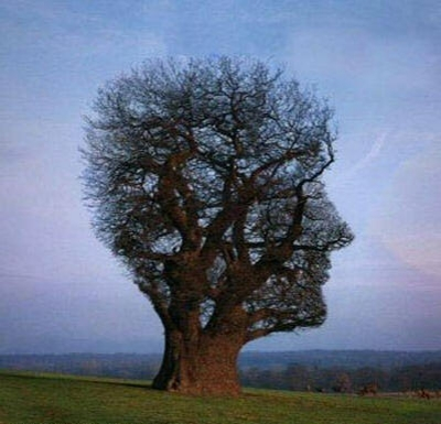 arbre humain visage