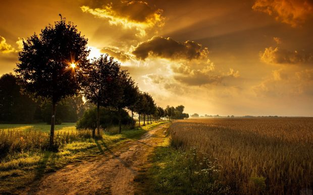 135-beau-paysage-avec-la-nature-divine-parfume-une-lumiere-celeste-eclaire