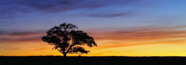 panoramique arbre