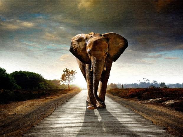 Elephant-Fantasy-HD