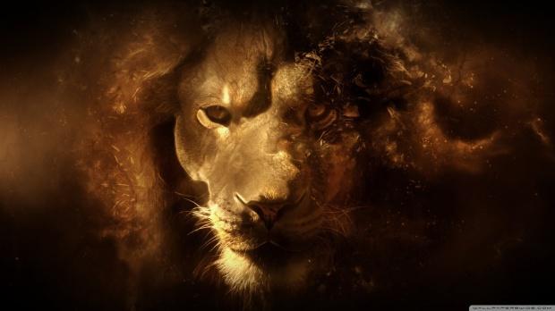 lion_2-wallpaper-1600x900