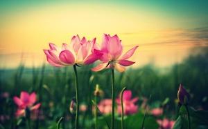 pink-lilies-hd-2880x1800.jpg